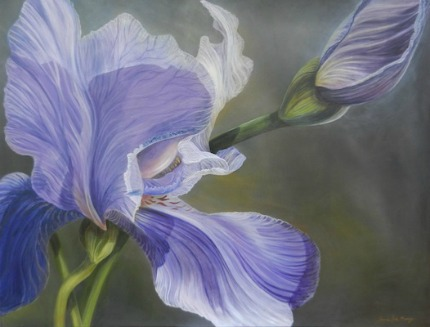 Joanne Massey Iris Intrigued